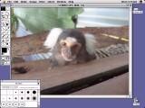 Adobe Photoshop 2.5.1 (1992)