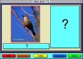 What Bird 4 (1995)