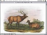 Multimedia Audubon's Mammals (1990)