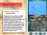 Ocean Life Volume 3: Hawaiian Islands (1994)